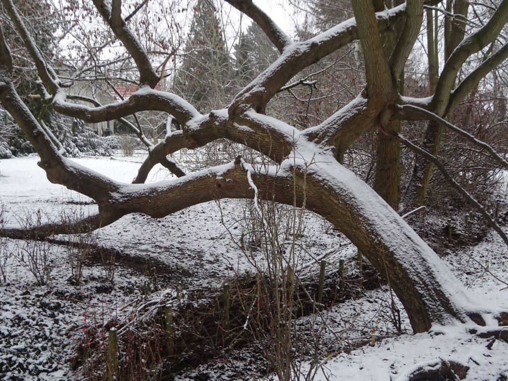 Winter im Park